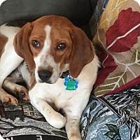 Adopt A Pet :: Luke Bryan - Atlanta, GA