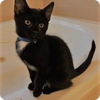Adopt A Pet :: Treacle - Columbia, SC