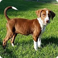 Adopt A Pet :: Toby - Scottsboro, AL