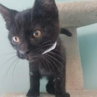 Adopt A Pet :: Speck - Seneca, PA