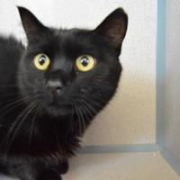 Adopt A Pet :: Sweetie - Buena Vista, CO