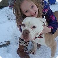 Adopt A Pet :: Petunia - Council Bluffs, IA