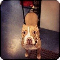 Adopt A Pet :: Vega - Pittsbugh, PA