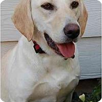 Adopt A Pet :: Clarissa - Cumming, GA