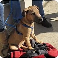 Adopt A Pet :: Stewie - Alexandria, VA