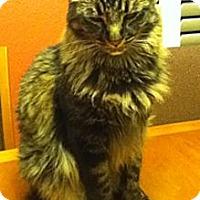 Adopt A Pet :: Mark - Laguna Woods, CA