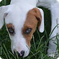 Adopt A Pet :: Ace - Shelter Island, NY