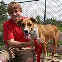 Adopt A Pet :: Cannoli - Elyria, OH