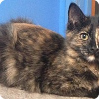 Adopt A Pet :: Toph - Valley Falls, KS