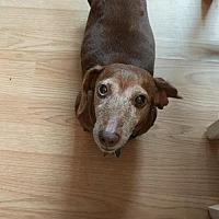 Adopt A Pet :: Crinkles - Orangeburg, SC