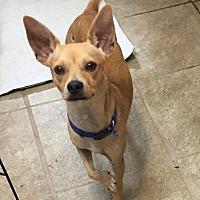 Adopt A Pet :: Timmy - Astoria, NY