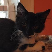 Adopt A Pet :: Peanut - Oakhurst, NJ