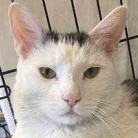 Adopt A Pet :: Eli - Norwalk, CT