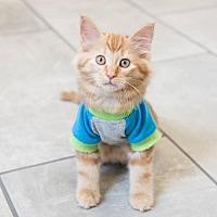 Adopt A Pet :: Yoshi - St. Paul, MN