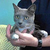 Adopt A Pet :: CHARLENE* - Watsonville, CA