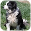 Photo 3 - Border Collie Dog for adoption in San Pedro, California - BANDYT