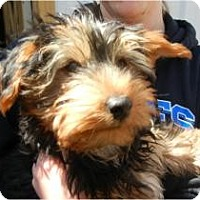 Adopt A Pet :: Sparky ADOPTED!! - Antioch, IL