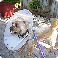 Adopt A Pet :: Teddy - CAPE CORAL, FL