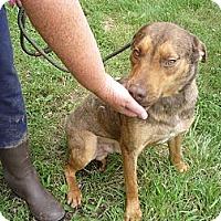 Adopt A Pet :: #258-13 @ Animal Shelter - Zanesville, OH