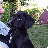 Adopt A Pet :: Sebastian - Lynnville, TN