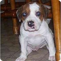 Adopt A Pet :: Brianne - Chandler, IN