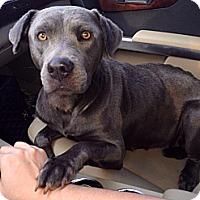 Adopt A Pet :: Lacey - Lake Worth, FL