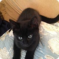 Adopt A Pet :: Galaxy - Syracuse, NY