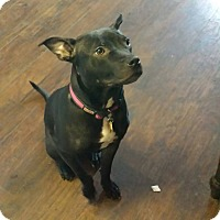 Adopt A Pet :: Inga - East Rockaway, NY