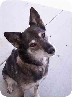 Shepherd (Unknown Type) Mix Dog for adoption in Auburn, California - Tasha