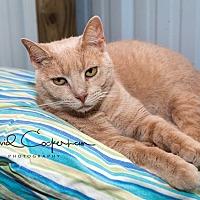 Adopt A Pet :: Harry- $25 adoption - Monterey, VA