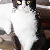 Adopt A Pet :: Sylvia - Fallbrook, CA