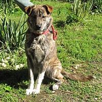 Adopt A Pet :: Carter - Oakland, AR