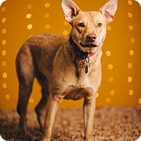 Adopt A Pet :: Daisy - Portland, OR