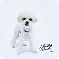 Adopt A Pet :: Dixie - Los Angeles, CA