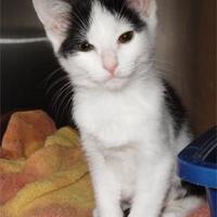 Adopt A Pet :: Daphne - Waupaca, WI