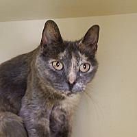 Adopt A Pet :: Macadamia - Elyria, OH