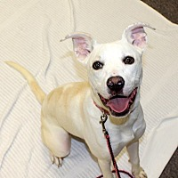 Adopt A Pet :: Chloe - Fort Wayne, IN