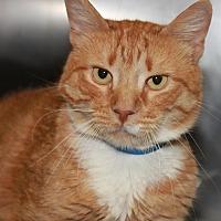 Adopt A Pet :: RAMOS - Clayton, NJ