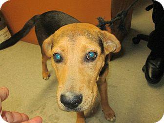 Shepherd (Unknown Type) Mix Dog for adoption in Henderson, North Carolina - C-C