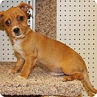 Adopt A Pet :: Mr. Bates - Gilbert, AZ