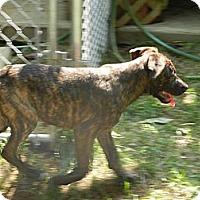 Adopt A Pet :: Julie (low adoption fee) - South Jersey, NJ