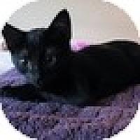 Adopt A Pet :: Ekko - Vancouver, BC
