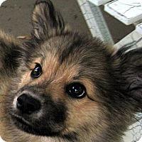 Adopt A Pet :: Baby Cheyenne - Oakley, CA