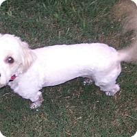 Adopt A Pet :: Daisy - Kingwood, TX