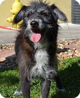 Terrier (Unknown Type, Medium) Mix Dog for adoption in Miami, Florida - Dorothy