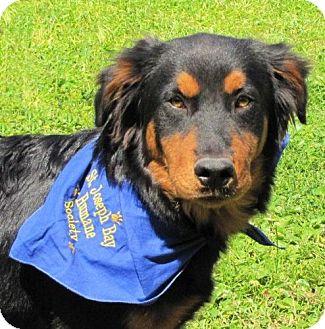 Gordon Setter Mix Dog for adoption in Port St. Joe, Florida - Stephen