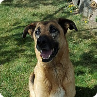 Adopt A Pet :: Dee Dee - Such a Love! - Bend, OR