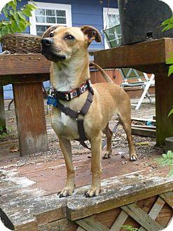 Dachshund/Chihuahua Mix Dog for adoption in Portland, Oregon - Mario