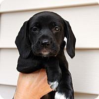 Adopt A Pet :: Minnie - Youngsville, NC