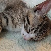 Adopt A Pet :: Amos - Tampa, FL